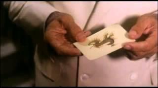 The Salamander 1981