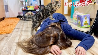 仕事での失敗がショックで倒れてしまった飼い主を全力で心配しにきた子猫w