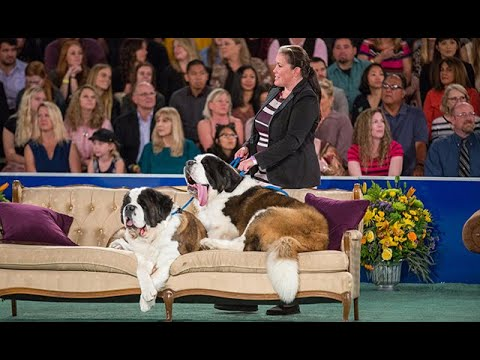 Behind the Scenes at the 2018 American Rescue Dog Show - Hallmark Channel