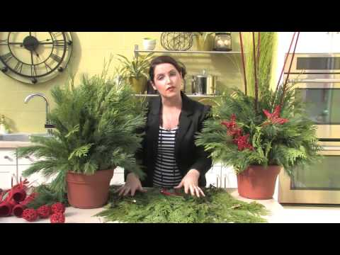 Making a Live Holiday Planter