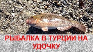 Рыбалка в Турции на удочку. Как ловить рыбу в Средиземном море на удочку. Турция. Рыба баллон