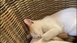 Kitten sleeps like a princess