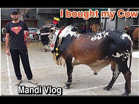 I Bought My Cow | Cow Mandi Vlog 2019 | Cow Qurbani 2019 | Lahore Cow Mandi 2019 | Eid ul Adha 2019