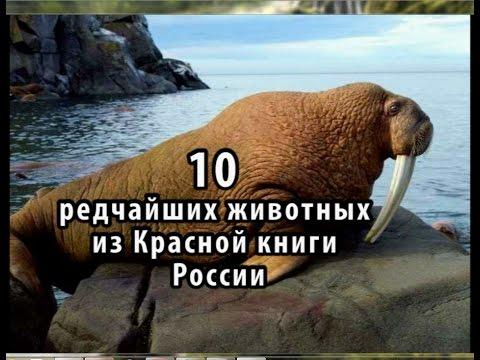 Красная книга России. Птицы.