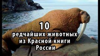 10 редчайших животных из Красной книги России