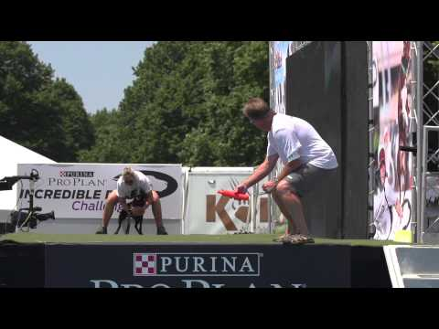 Diving Dog 1st Place - Incredible Dog Challenge 2015 Boston, MA
