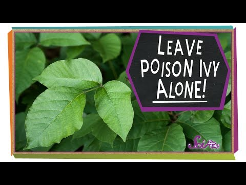 Leave Poison Ivy Alone! | Botany For Kids