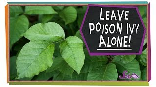 Leave Poison Ivy Alone!