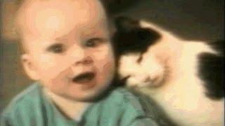Смешные кошки - 7, прикольное видео, обхохочешься!!!!! Позитив!!!