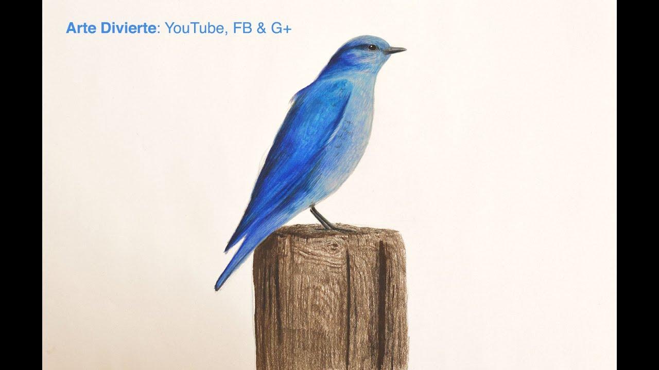 Cómo dibujar un pájaro azul con lápices de colores - El ...