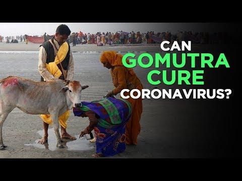 Coronavirus Hack: Can Cow Urine (Gomutra) Or Cow Dung Really Cure Coronavirus? | NewsMo