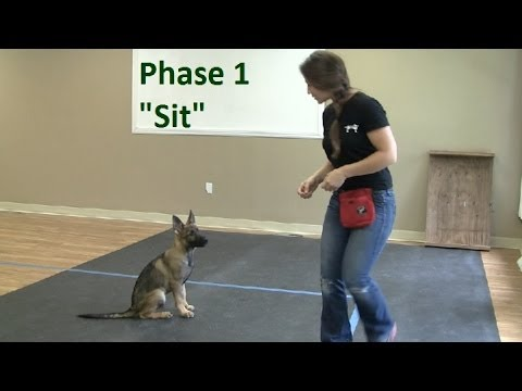 """How to Train a Dog to """"Sit"""" (K9-1.com)"""