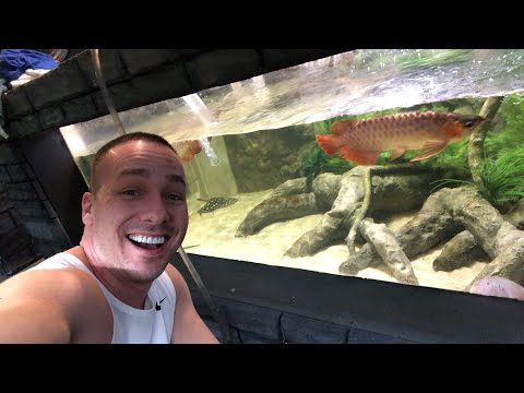 late-night-live-with-the-king-of-diy-s-aquariums