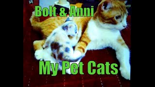 Short and Raw:  My  Cats Bolt & Anni Vine Video Compilation (2013)