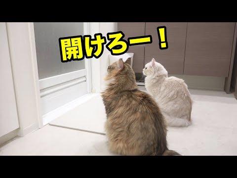 お風呂に入りた過ぎる猫を入れてみた