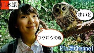 台湾人が京都のふくろうの森に潜入!京都のフクロウの森