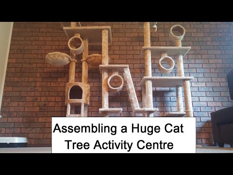 Assembling a Huge Cat Tree Activity Centre