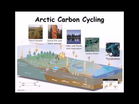 24. Carbon cycle, nitrogen cycle