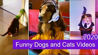 Funny Dogs  And  Funny Cats 2020 # 2 |  Funny Pet And Funny Animal videos