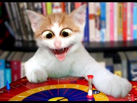 Best Funny Cats Vine Compilation – Top Cats Fails
