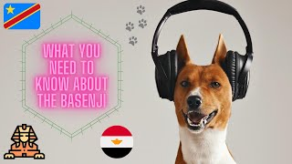 Getting To Know Your Dog's Breed: Basenji Edition