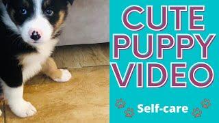 Border Collie Puppy // Cute Puppy Video 2020