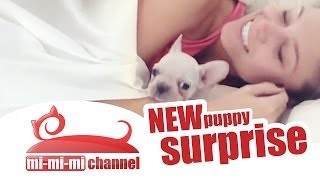 Puppy - the best gift EVER. Unusual way of getting puppies