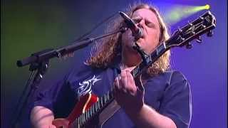 Watch Govt Mule Lay Of The Sunflower video