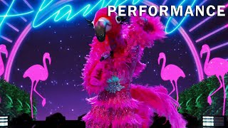 """Gambar cover Flamingo sings """"Sucker"""" by The Jonas Brothers 