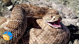 Phoenix Herpetological sanctuary rescues snakes, other reptiles from Valley homes