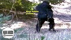 Bigfoot Massachusetts Sasquatch Giant