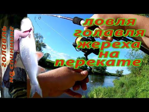 Ловля жереха на реке - Рыбалка на спиннинг