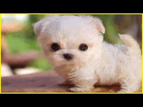 Cutest Dog Breeds Part 3