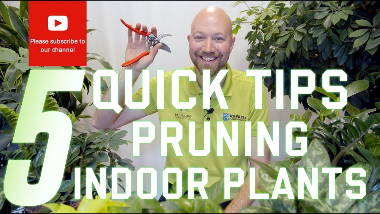 5 Quick tips Pruning indoor plants