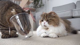 아주-똑똑한-고양이