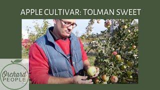 Orchard People Fruit Tree Cultivar Profiles  Tolman Sweet Apple Tree