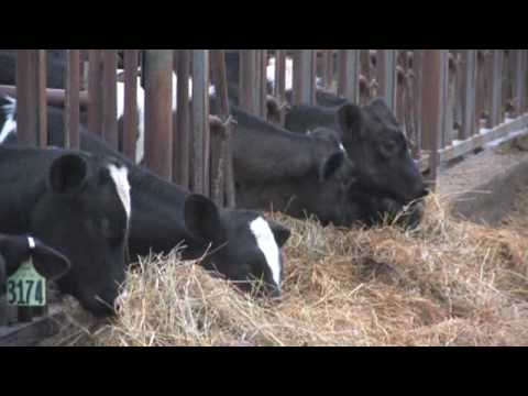 ORGANIC FARMING TAKING OFF ACROSS THE U.S.
