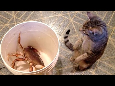 You'll LAUGH FOR SURE! - Best FUNNY ANIMALS