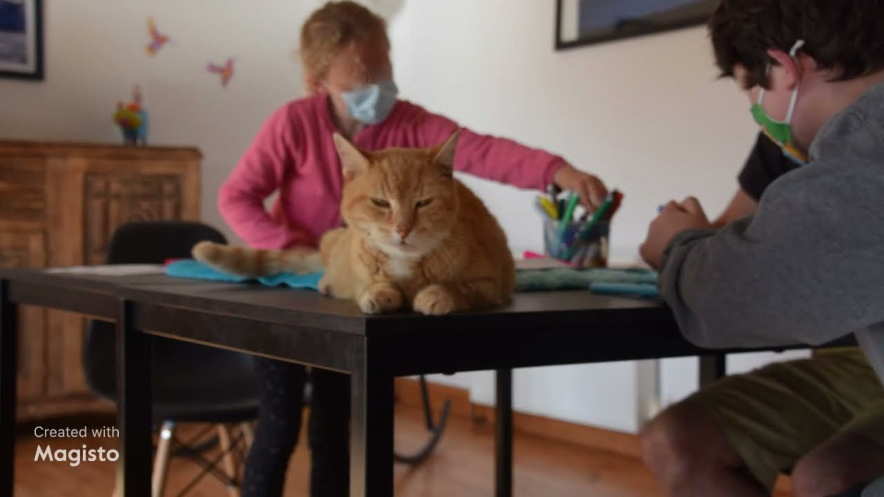 🐾🐾Médiation animale, Snoezelen, préparation du futur jardin thérapeutique et des chiens en stages;