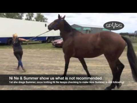"How To ""trot Up"" At A 3DE"