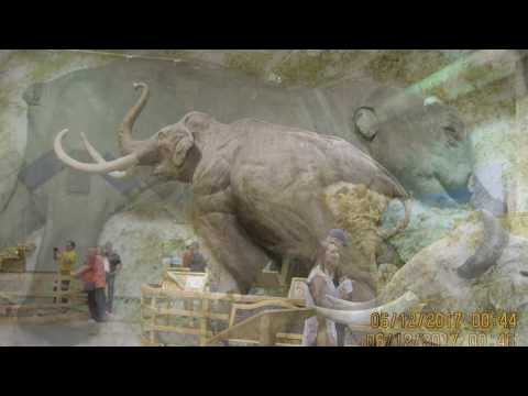 The Largest Collection Of Mammoth In The World