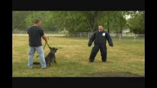 Police Dog Attacks Guy, Perrytwins Outdoors, Killer Dog, Dog Attack,  Pitbull,  Rottweiler, K9, Kill