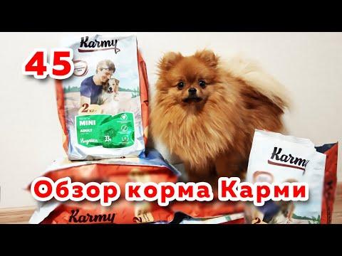 Шпиц пробует корм Карми для собак, обзор корма Karmy, отзыв о сухом корме Карми для собак
