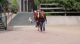"""Corinna Schumacher: """"Nur glückliche Pferde können Erfolge erzielen!"""""""