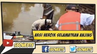 Aksi Heroik Selamatkan Anjing