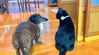 黒子猫の周りをしつこいワンコが徘徊してしまった結果。。