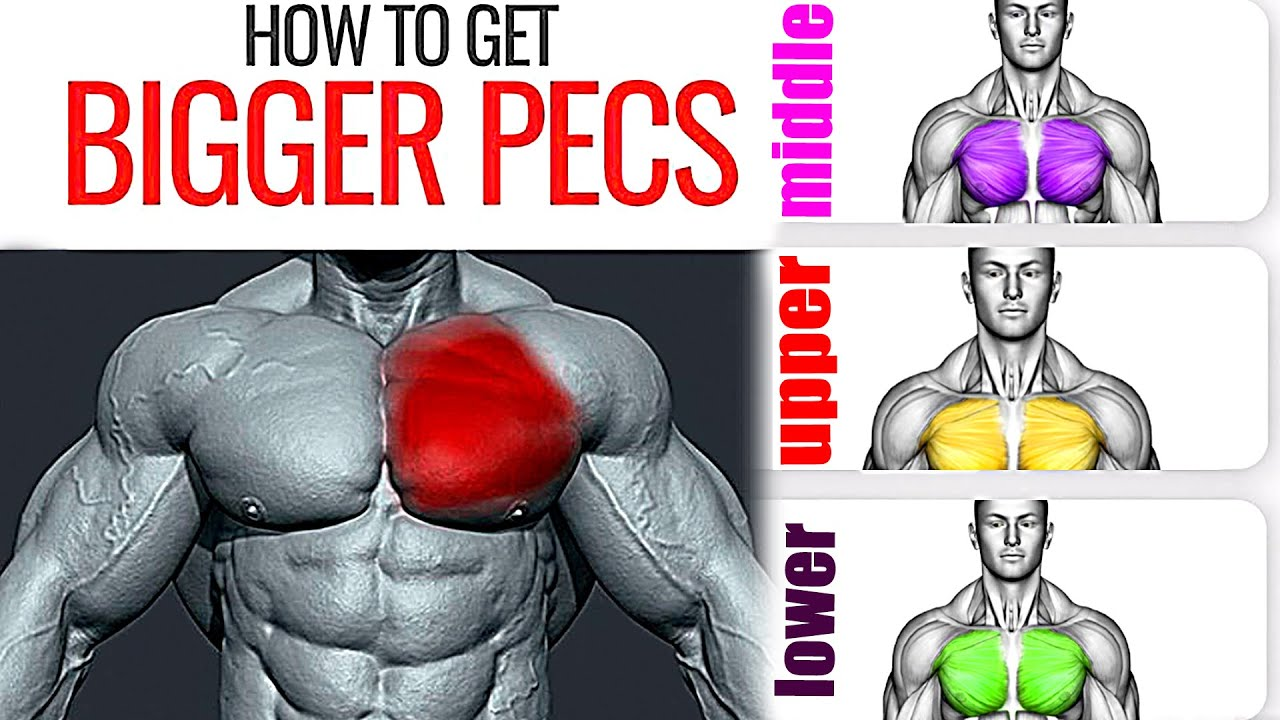 How to Get Bigger Pecs (11 Best Chest Exercises You Should Be Doing)