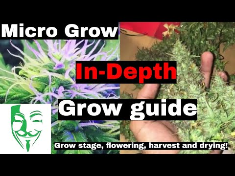 EVERYTHING about Micro Grow! In-Depth explanation Full grow cycle