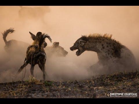 Поле битвы африканских