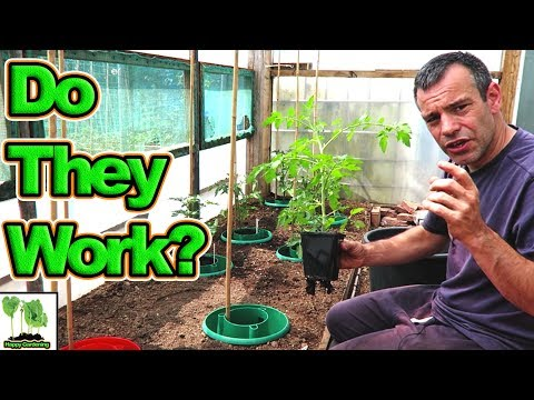 How To Grow Awesome Tomatoes Using Tomato Halo's